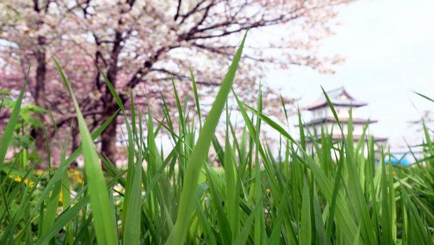 ネット用語の「草」とは?意味と使い方を解説