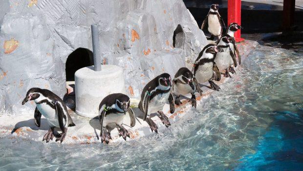 「ファーストペンギン」とは?意味や使い方を解説
